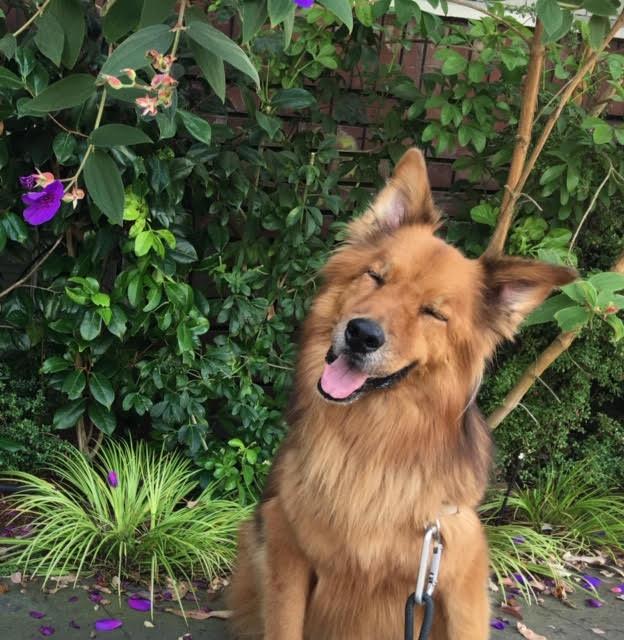 Marlo - Chief Doggo
